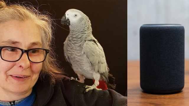 成精了!美国鹦鹉用AI音箱上网购物