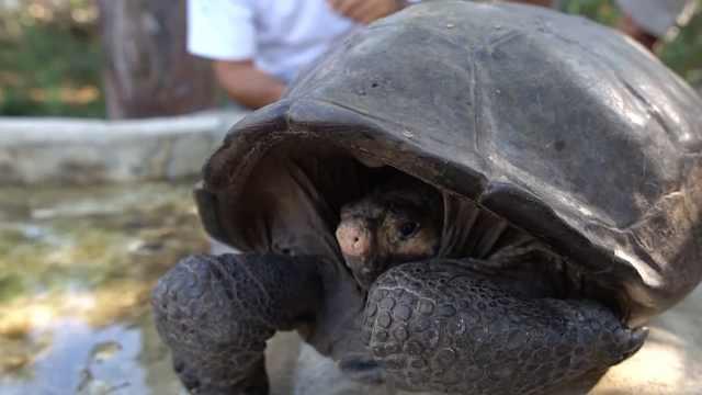 宣布灭绝一个世纪后!百岁神龟再现