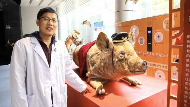 佩奇年!4人制20头标本:不想吃猪肉