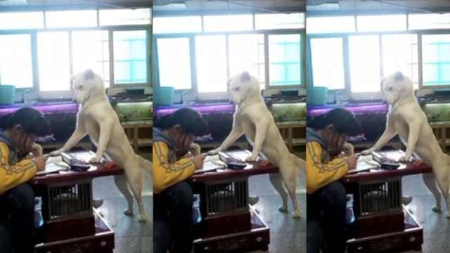 操碎心!连狗子都监督小主人做作业?