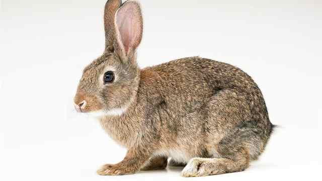 美食博主王刚烧兔子违背动物福利吗