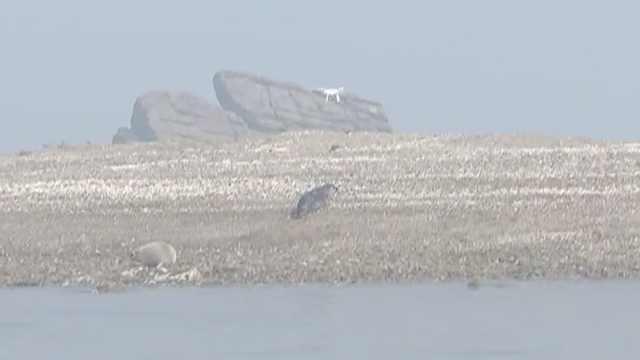 大连盗猎斑海豹有新家,已恢复健康