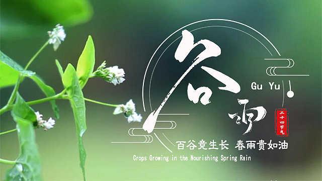 谷雨:百谷竞生长,春雨贵如油