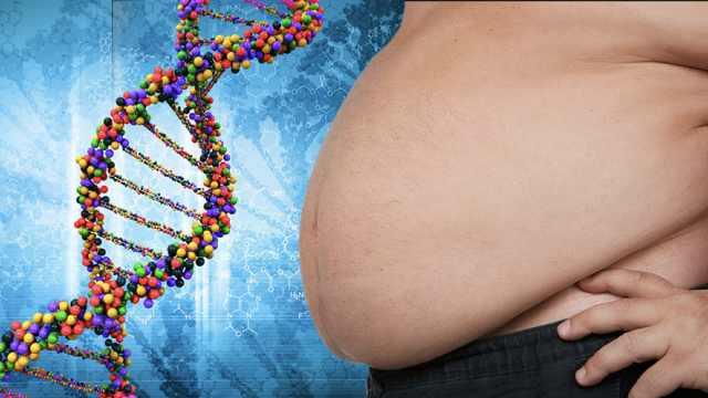 50美元!基因检测可预测肥胖风险