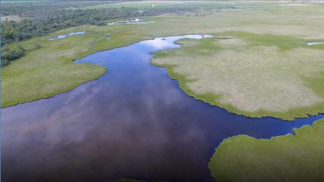 美哭!新疆湿地迎来50万只迁徙候鸟