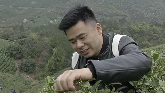 小伙用退役金包茶山,一斤茶2000元