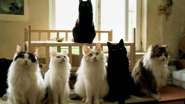 《猫的城》宣传片:我要萌翻你!