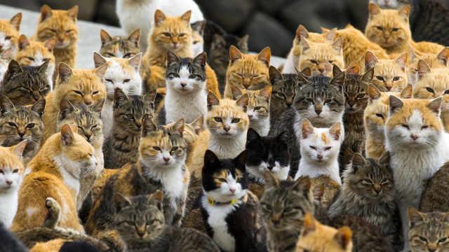 猫之岛,因岛上有上百只猫而得名