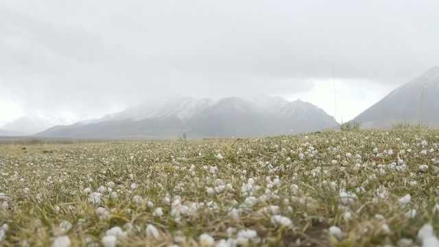 甘肃山丹军马场降冰雹,草原铺白纱