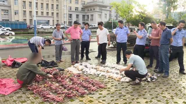 4小时猎杀214只野生鹭鸟,三人获刑