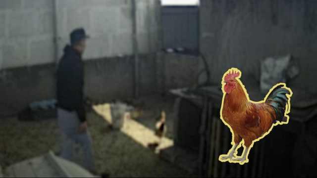 听到鸡叫就肚子饿!男子连偷两天鸡