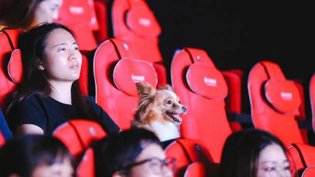 带上狗狗一起看电影,是怎样的体验