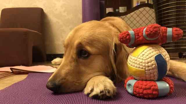 新研究:遗传基因影响人是否爱养狗