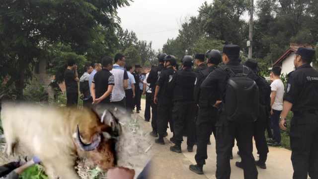 野生羚牛闯村庄袭击村民,致2死2伤