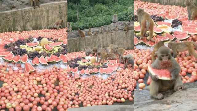 活得还不如猴!景区满地水果给猴吃