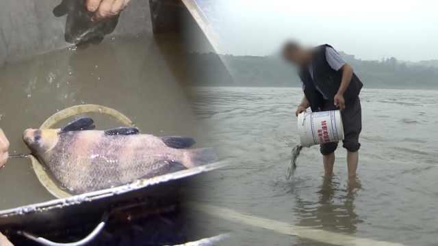 他禁渔期捕珍稀鱼,放生4万鱼苗悔罪