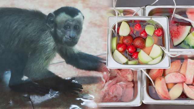 混得不如猴!最壕动物园收樱桃冰棍