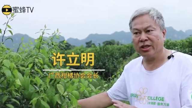 广西高温多雨的天气柑橘如何管理