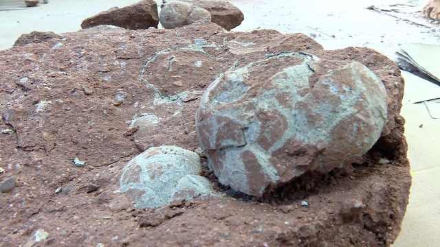 牛!小学生暑假游玩发现一窝恐龙蛋