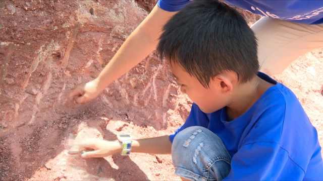 小学生揭秘发现恐龙蛋:博物馆看过