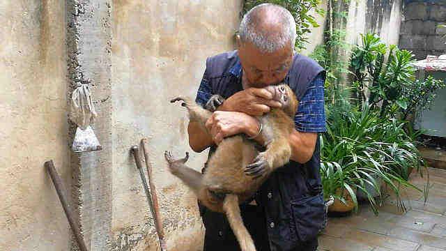 大爷照顾受伤猕猴,分别时亲吻不舍