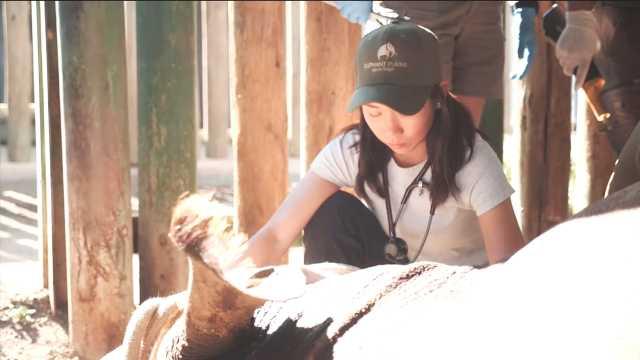 生死营救盗猎者残忍伤害的黑犀牛!
