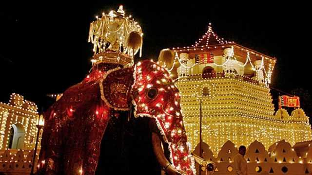 斯里蘭卡大象背著一顆佛牙舍利出行