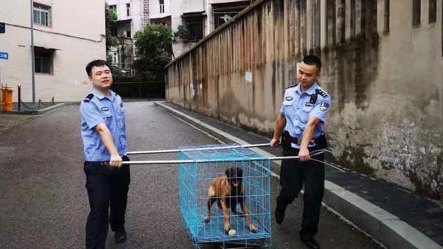 主人被拘留,马犬大闹派出所也被拘