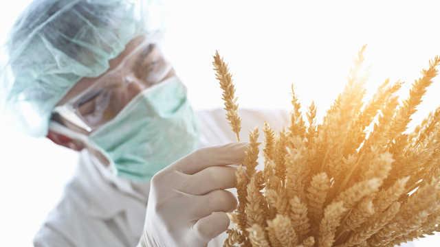 交大教授江晓原:转基因食品能吃吗