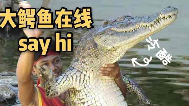 94年泰国鳄鱼养殖:吃肉做包搞旅游