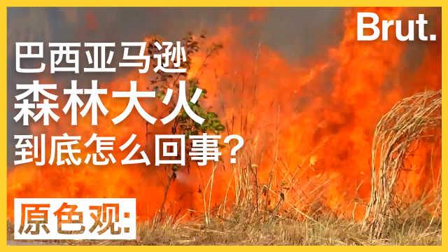 巴西亚马逊丛林大火到底怎么回事?