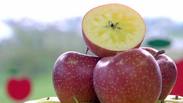 蜜糖般酥松,红富士苹果的秘密