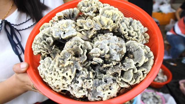 云南野生菌市场:257种菌,你pick谁