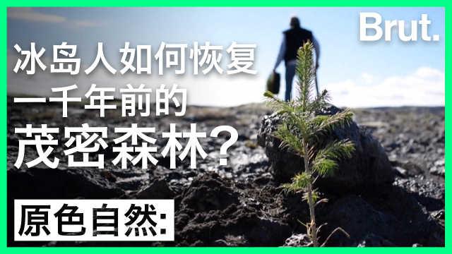 冰岛人如何恢复一千年前的森林?