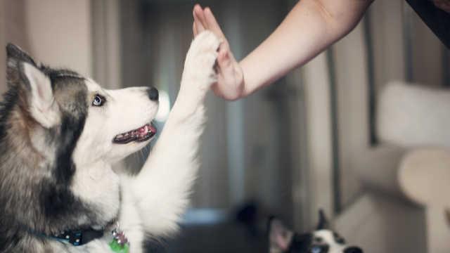 新研究:人类已经重塑了狗的大脑