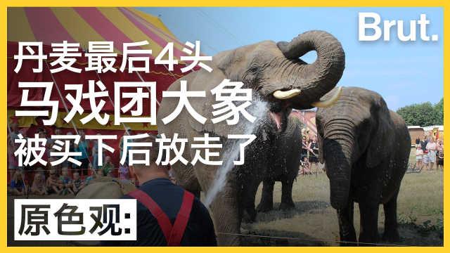 丹麦人为何花重金帮马戏团大象赎身
