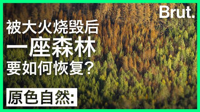 被大火烧毁的森林是怎么恢复的?