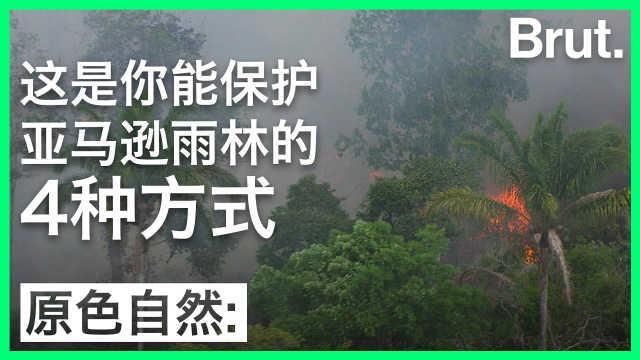 这是你能保护亚马逊雨林的4种方式