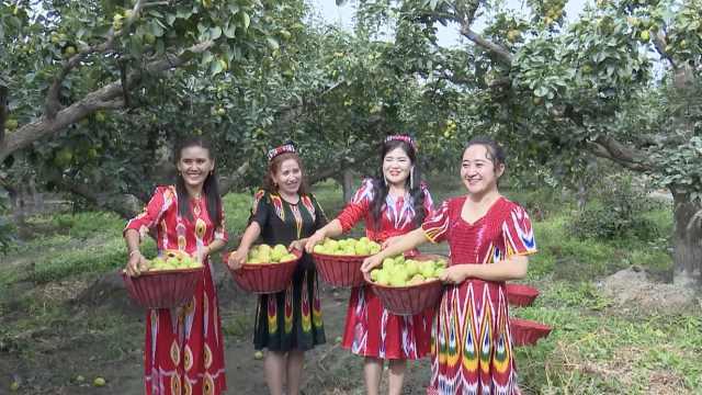 30万吨库尔勒香梨成熟,果农采摘忙