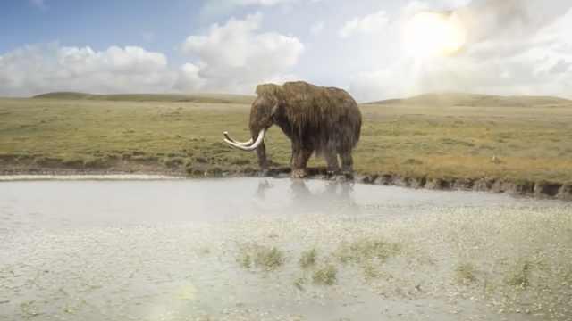 最后的猛犸象!4000年前灭绝于孤岛