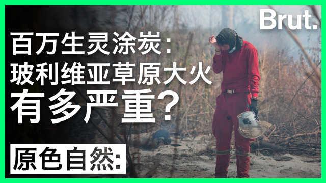 生灵涂炭:玻利维亚大火有多严重?