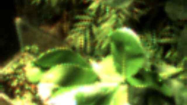 史上首张植物自拍!自己发电自己拍