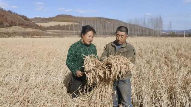 为种水稻,他花30万买64头驴造肥料