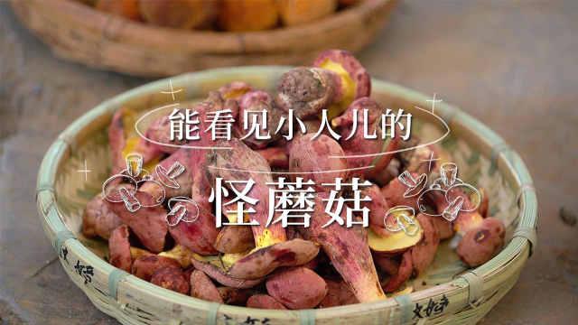 【花絮】云南的菌类你知道多少种?