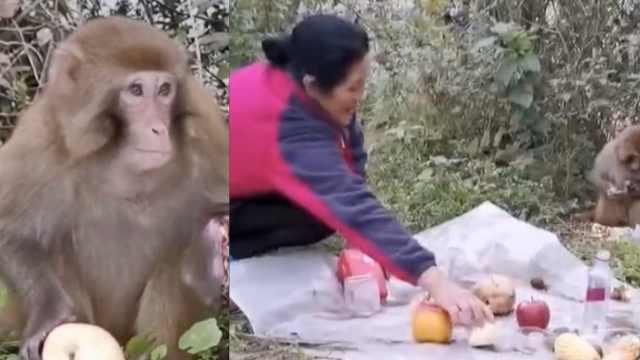 猴哥断左手进村求助,村民暖心喂食