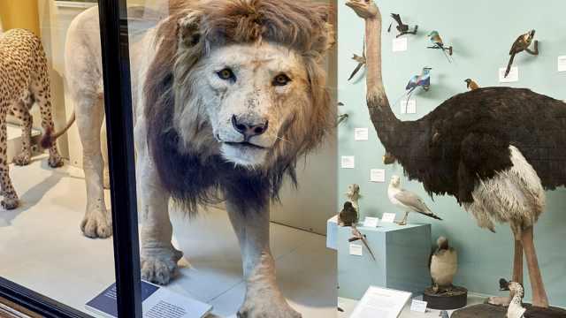 博物館里雌性標本少于雄性被批歧視