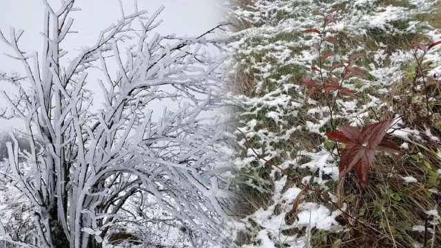 雪树银花!重庆迎2019秋后第一场雪