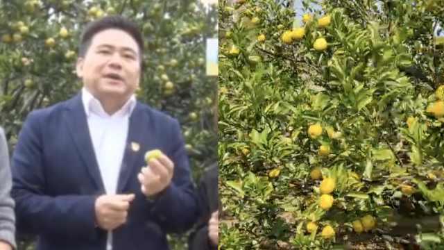 县长直播卖橘,几小时销售一万多斤