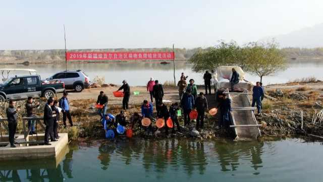 水中大熊猫!新疆放流2万尾扁吻鱼苗