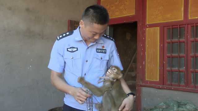 最暖对视!萌猴被救,环抱民警不撒手